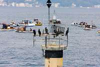 Cormorants And Fishermen On The Bosphorus
